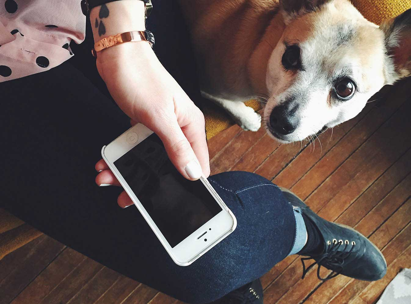 Dog looking at hand holding mobile phone